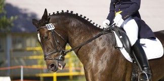 paarden opleiding